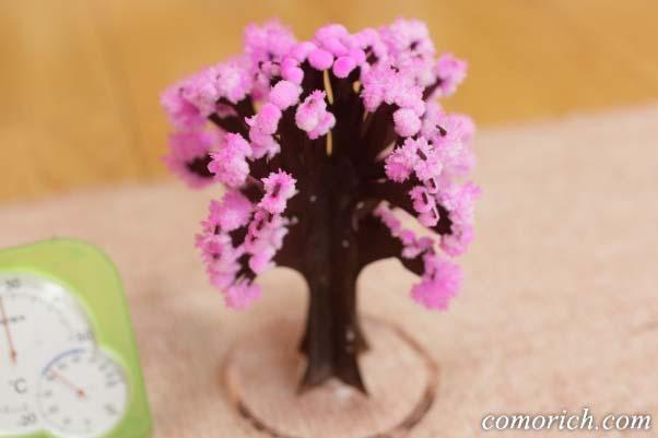 『マジック桜』の育て方のコツ