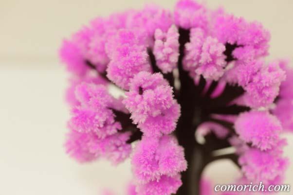 12時間で咲く不思議な『マジック桜』