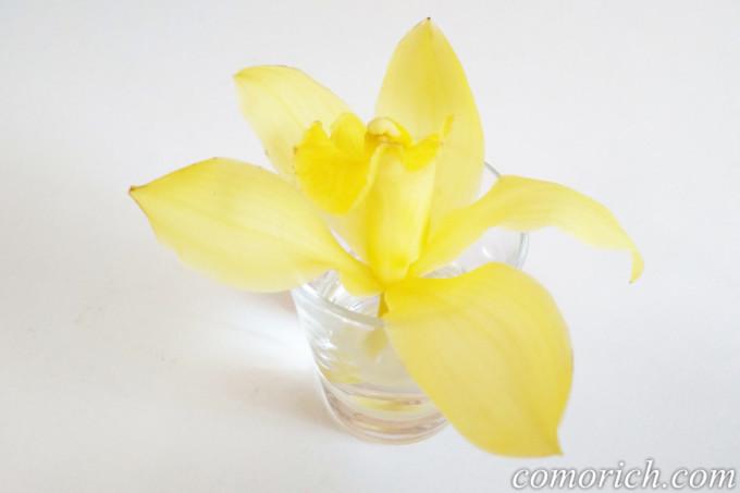 花束を長く楽しむコツ!まだまだ元気な花は小分けにして小さく活けよう